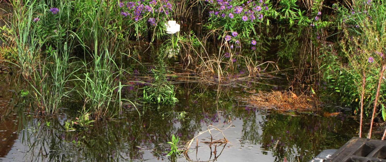 Rain Gardens - Friends of Georgetown Waterfront Park